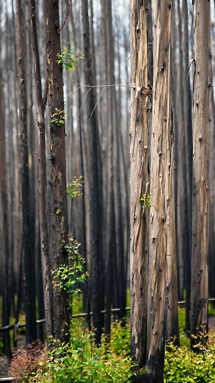 Quand Acheter Son Bois De Chauffage est-ce une solution de chauffage économique ?