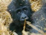 Le monde merveilleux des bébés animaux