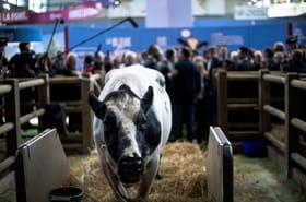 Salon de l'Agriculture: une 57e édition sous le signe de l'innovation