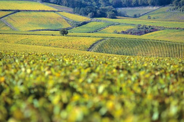 Escapade viticole