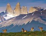 Wild Americas
