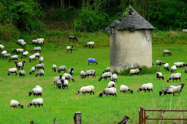 Moutons au Pays basque