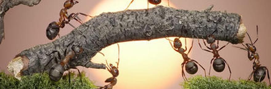 Les drôles de fourmis d'Andrey Pavlov