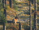 La forêt de Bavière : un joyau au coeur de l'Europe