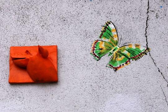 Cochon versus papillon