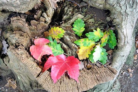 Mélange de feuilles mortes