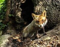 Chroniques sauvages : Le monde secret de la forêt