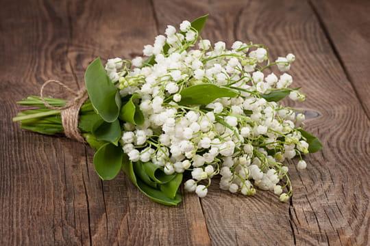 Muguet: fleur porte-bonheur ou toxique? Photos, plantation, entretien