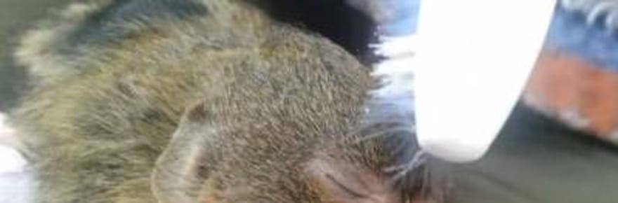 Ninita, la nouvelle mascotte des espèces rares