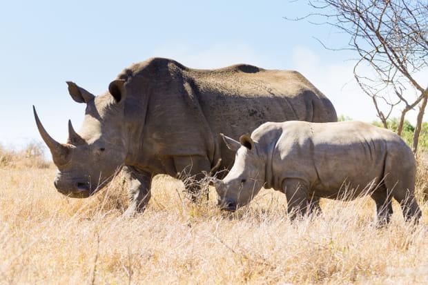 La réserve d'Hluhluwe-Umfolozi en Afrique du Sud