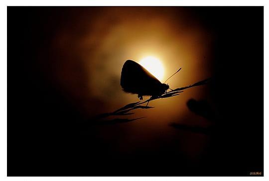 Vos meilleures images d'octobre 2011