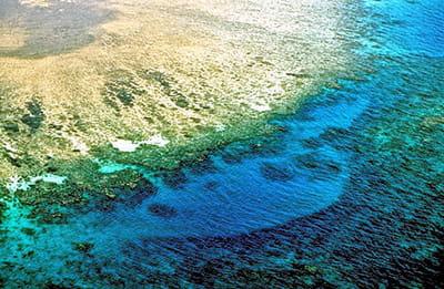 l'écosystème marin s'effondrera si les récifs coralliens disparaissent.