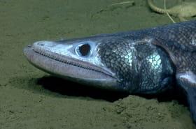 Les poissons les plus effrayants des eaux profondes