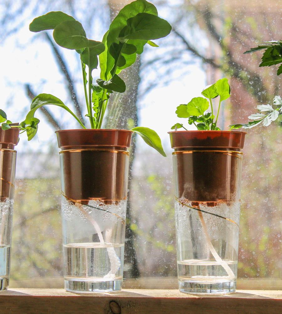 100 Génial Conseils Arrosage Pour Plantes En Pot