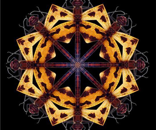 Symétrie parfaite