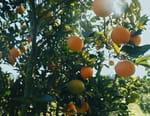 Qui a volé le goût de l'orange ?