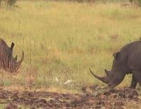 Au coeur des parcs nationaux : Parc national de Meru (Kenya)