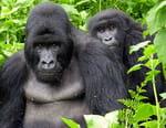 Trésors d'Afrique