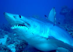 requin julien grinsztajn