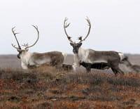 Alaska, survie avec les ours : Les soldats de l'Arctique