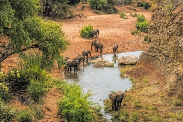 Le parc national Kruger en Afrique du Sud