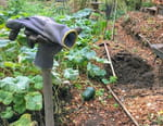 La vie sauvage du jardin : Une journée d'automne