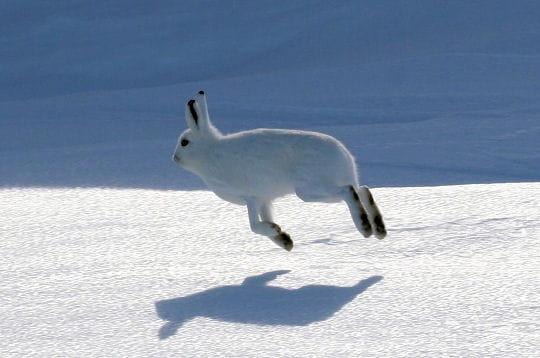 50 moments insolites de la vie animale - Animaux pole nord ...