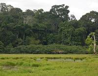 Les mondes inondés : Loango : le joyau de l'Afrique