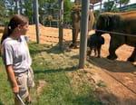 Derrière les grilles du zoo
