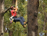 A la reconquête des forêts : Tasmanie, sauver les derniers géants
