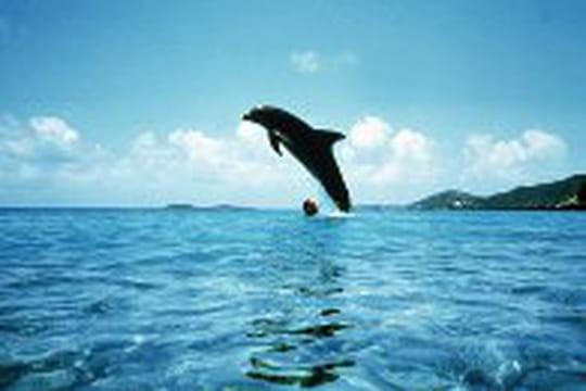 Le dauphin du Grand Bleu est mort