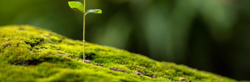 Fiscalité écologique: toutes ces taxes que vous payez!