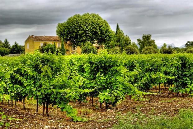 Le Vaucluse, Rhône