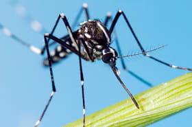 Toutes les réponses à vos questions sur le moustique tigre