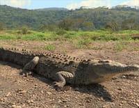 Au coeur des parcs nationaux : Parc national de Manuel Antonio (Costa Rica)