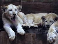 Zoo Nursery France : Les jeux d'Amnéville