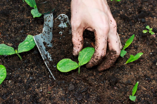 Terreau: comment choisir le meilleur et l'utiliser au jardin