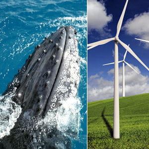 les nageoires de baleine ont permis de penser à des pales d'éoliennes plus