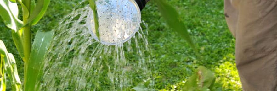 Jardinage bio : des astuces pour réussir votre jardin au naturel