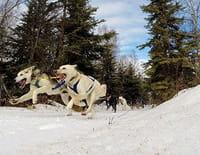 Into The Wild : Alaska : Première course de la saison