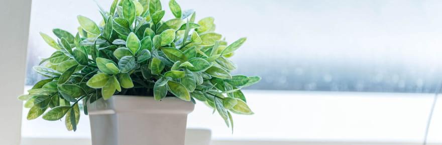 Comment bien choisir sa plante verte?