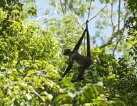 Selva, la forêt sous les tropiques