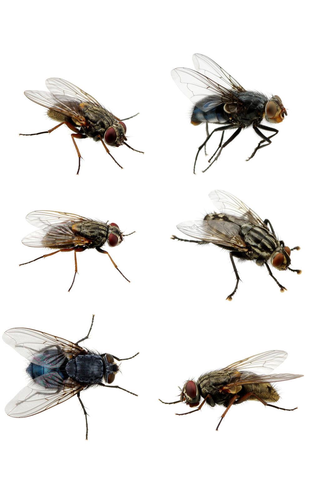 Eloignez les mouches et moucherons