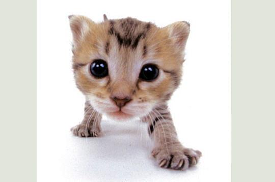 Les plus adorables bouilles de chatons