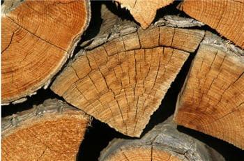 la biomasse comprend toutes les matières organiques telles que le bois, le