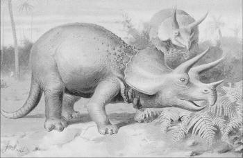 animal vivant en groupe, le tricératops se servait aussi de ses cornes pour