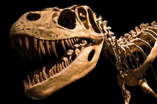 Un T. Rex fait sensation au Museum d'histoire naturellede Paris