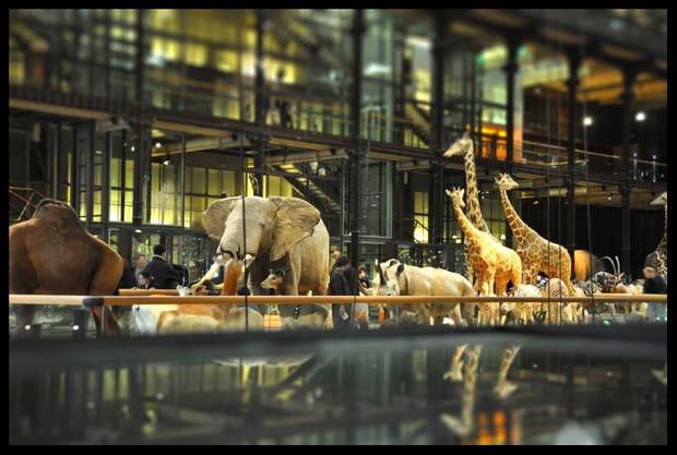 18e: Muséum national d'histoire naturelle