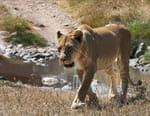 La lionne et son royaume