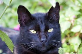Il tente de voler un chat, persuadé qu'il est la réincarnation de sa mère